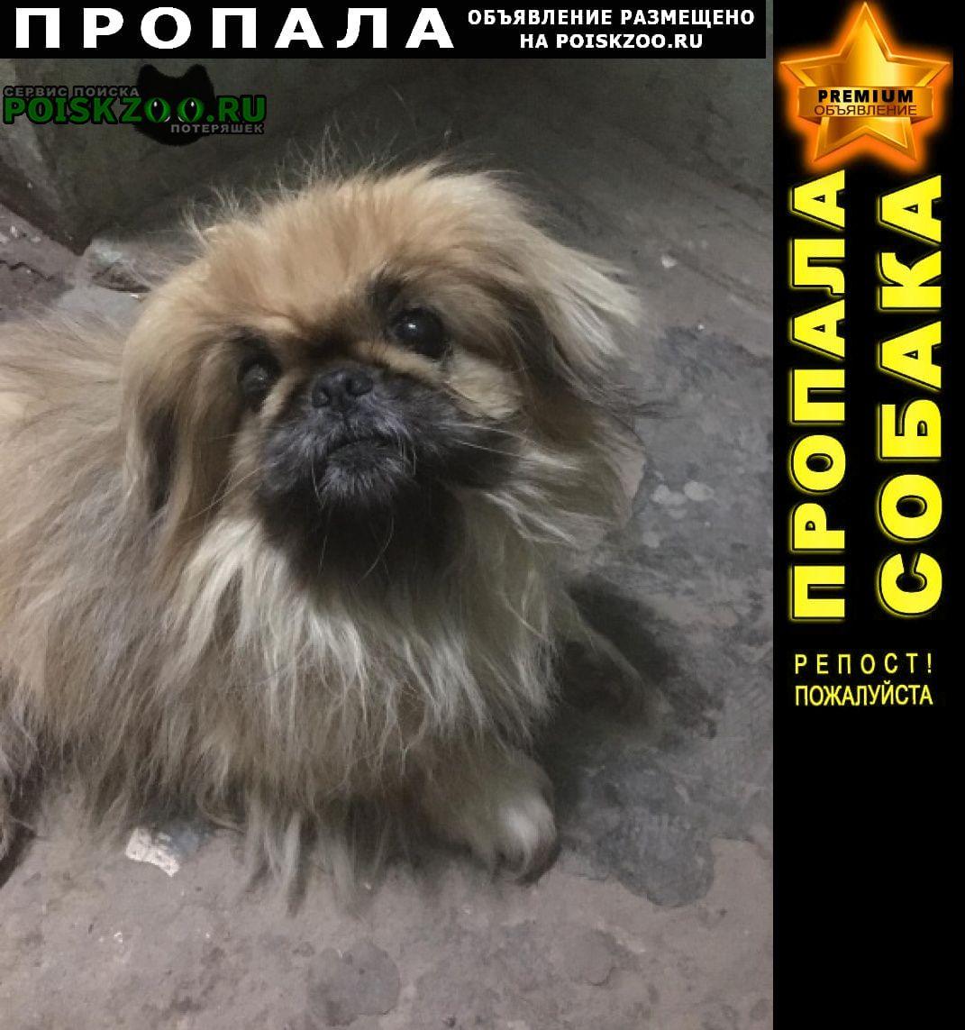 Михайлов Пропала собака