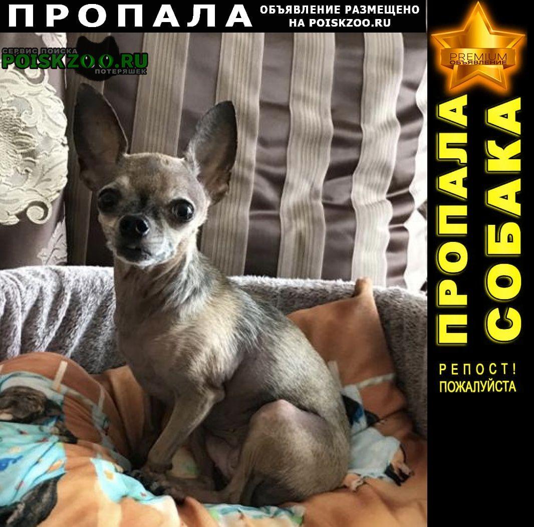 Пропала собака породы той терьер Гвардейское Крым