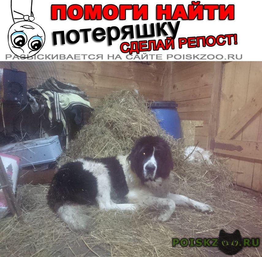 Пропала собака в новозавидовском вблизи платф.завидово г.Конаково