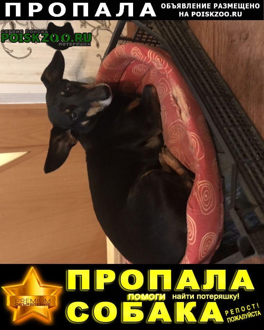 Пропала собака заволжский р-н, Тверь