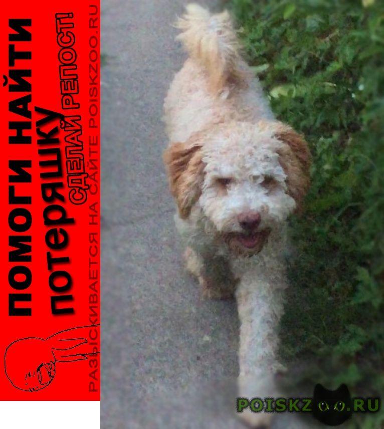 Пропала собака кобель г.Ногинск