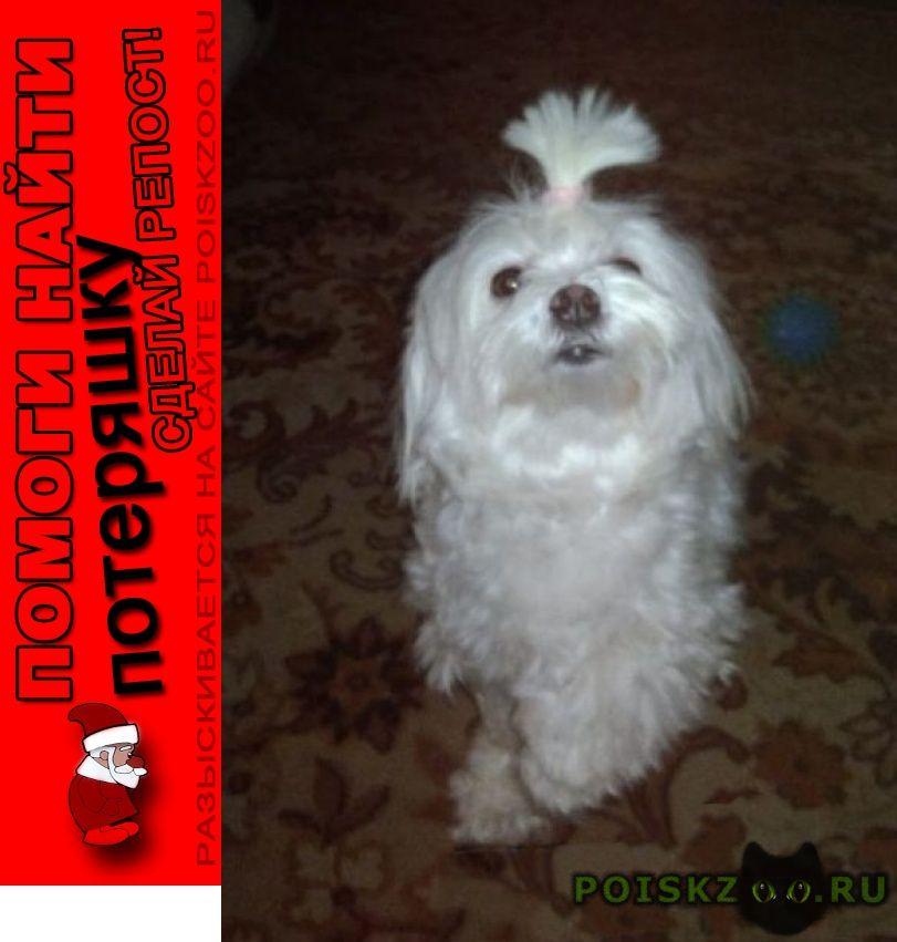 Пропала собака в ясенево г.Москва