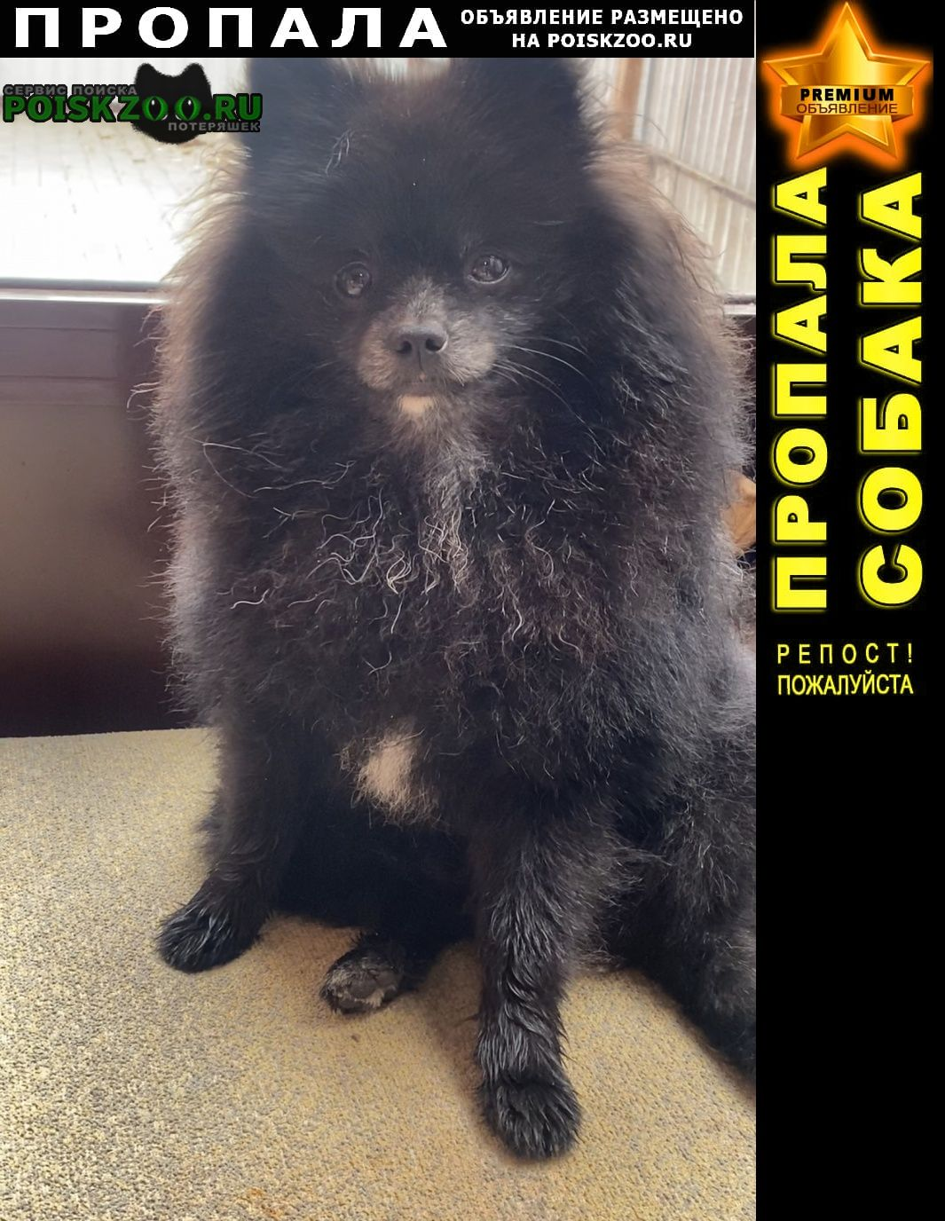 Пропала собака кобель Архангельское