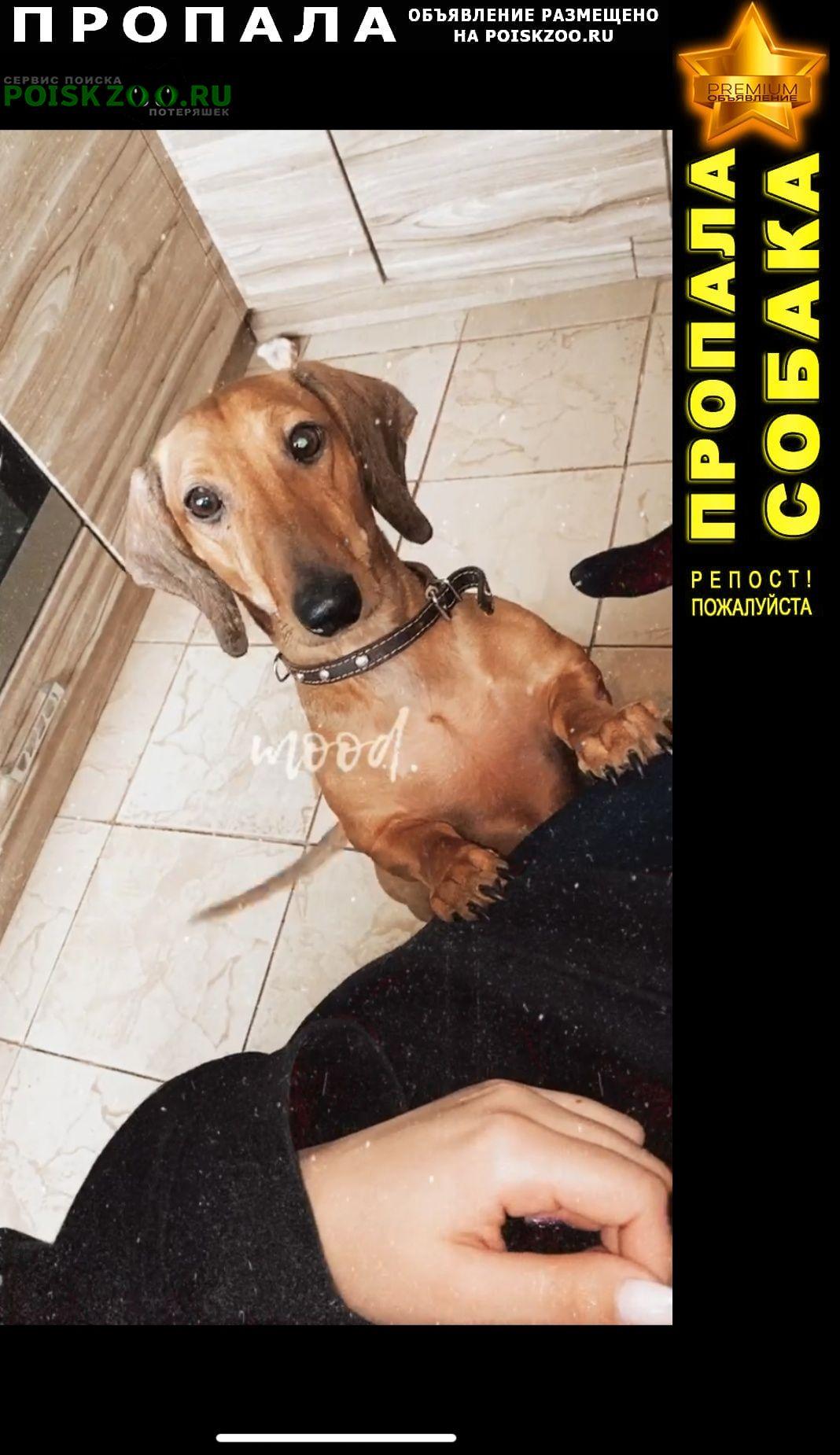 Пропала собака в районе станции амурский залив г.Владивосток