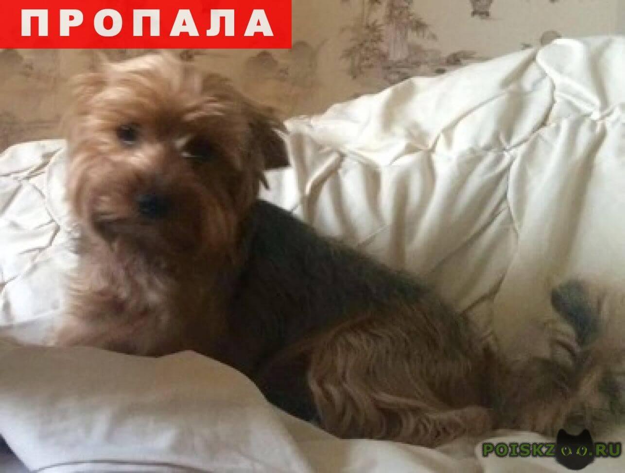 Пропала собака кобель ищем пропавшего йорка г.Москва