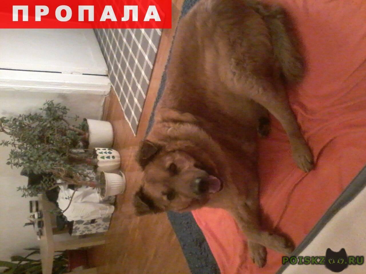 Пропала собака кобель рыжий пес убежал через дорогу от петарды г.Москва
