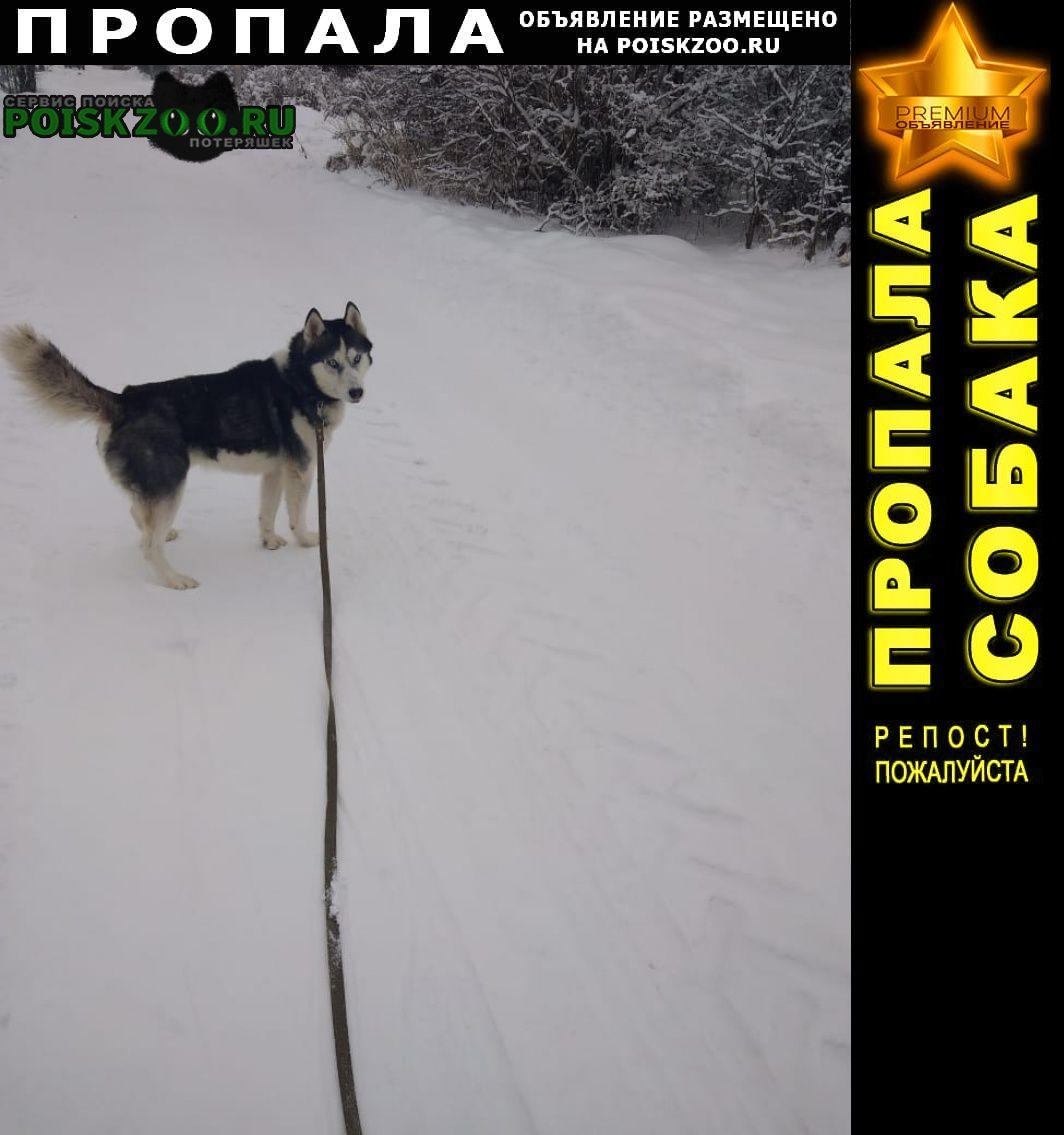Пропала собака кобель Кострома