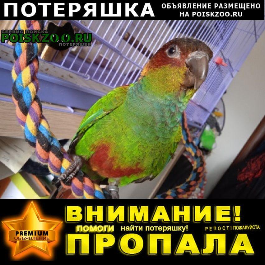 Пропал попугай Троицк