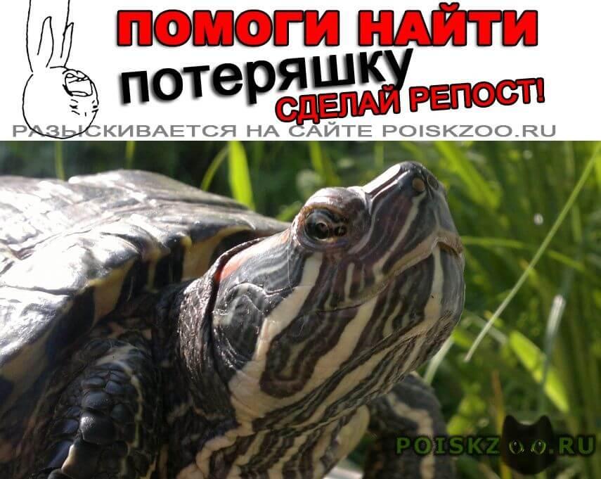 Пропало домашнее животное черепаха г.Конаково