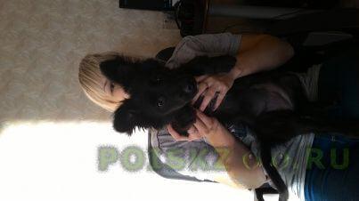 Найдена собака около парка 1 мая г.Нижний Новгород