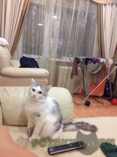 Пропал кот г.Пермь