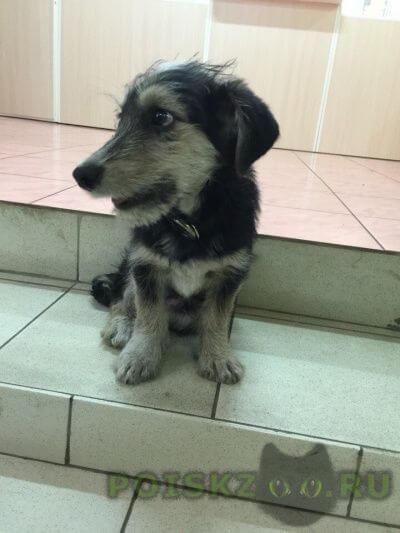Найдена собака кобель г.Улан-Удэ