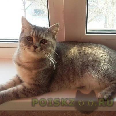Пропала кошка домашняя  г.Великий Новгород (Новгород)