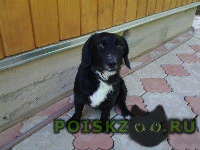 Пропала собака кобель г.Одинцово