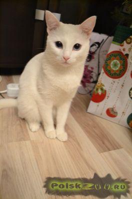 Пропала кошка г.Энгельс