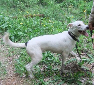 Найдена собака кобель белый молодой пес г.Москва