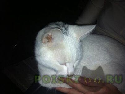 Найден кот белый с серой буквой v на голове г.Троицк