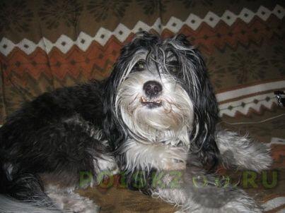 Пропала собака кобель г.Иркутск
