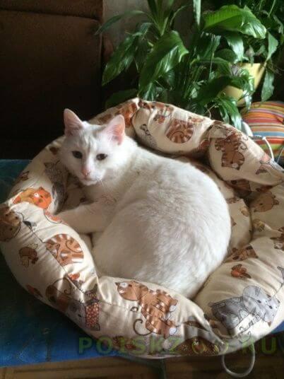 Найдена кошка г.Лобня