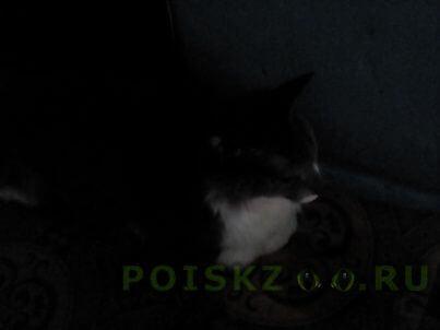Найдена кошка или котик не знаю. г.Ханты-Мансийск