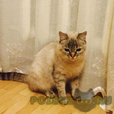 Найдена кошка г.Ставрополь