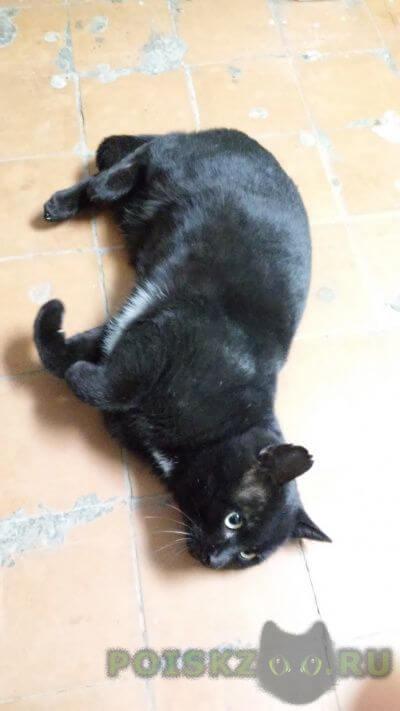 Найден кот, район 1 сов. больницы г.Саратов