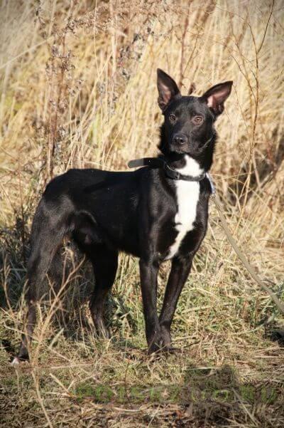 Пропала собака кобель г.Щербинка