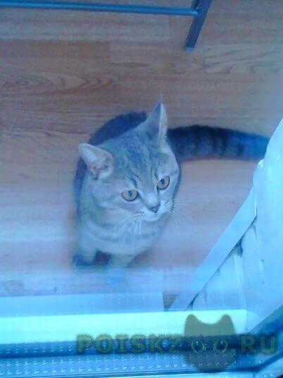 Найден кот г.Реутов