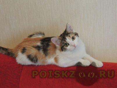 Пропала кошка г.Нижневартовск