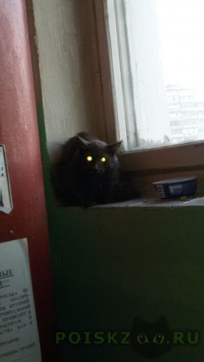 Найдена кошка серый кот  . ул. россошанская д.2, корп. 1 г.Москва