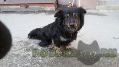 Найдена собака кобель маленькая собачка г.Ростов-на-Дону