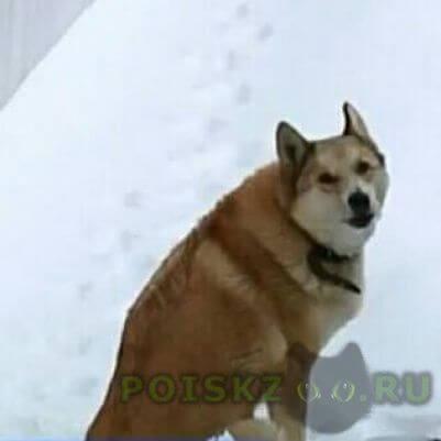 Найдена собака г.Нарофоминск