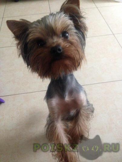 Пропала собака кобель г.Николаев