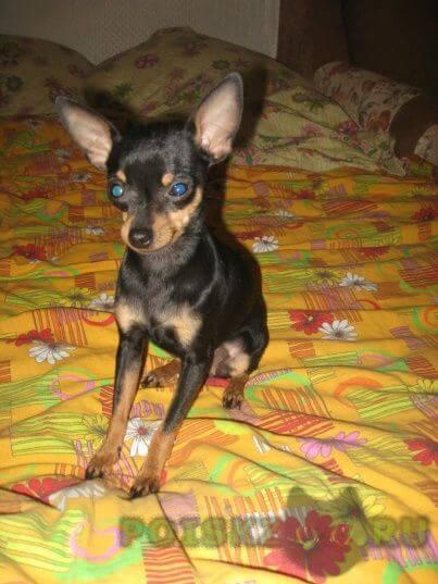 Пропала собака кобель верните собаку г.Екатеринбург