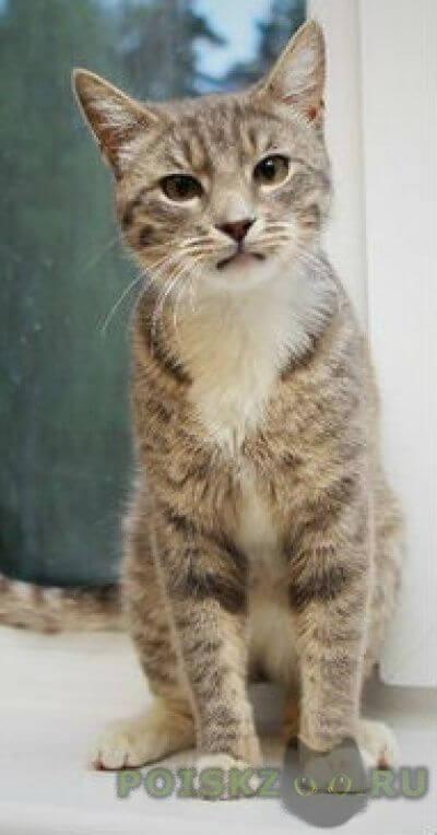 Найден кот молодой г.Всеволожск