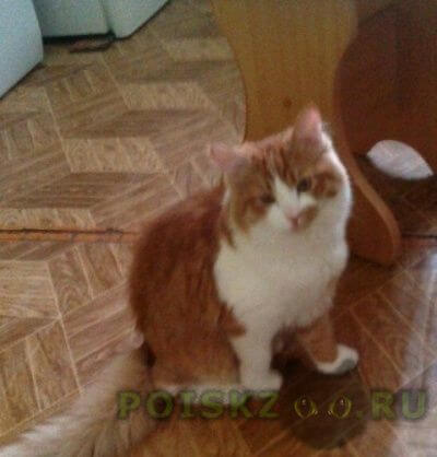 Пропал кот тишка г.Екатеринбург