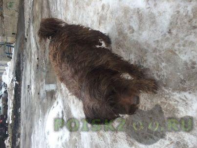 Найдена собака г.Нижний Новгород
