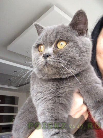 Найден кот г.Владикавказ