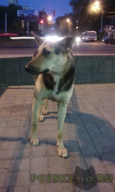 Найдена собака на вид 4-7 лет, девочка, дворняга, с виду ухоженная. ждет хозяина г.Самара