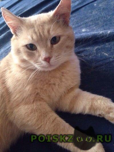 Пропал кот в гольяново г.Москва