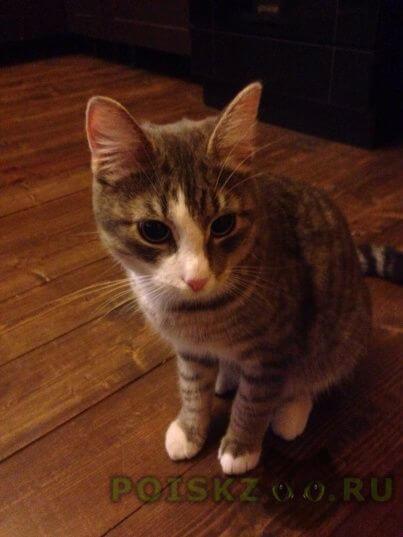 Пропала кошка кот г.Одинцово