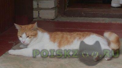 Пропал кот г.Сергиев Посад