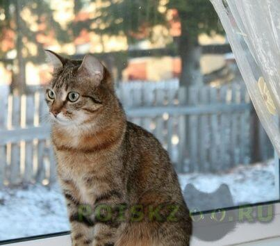 Пропала кошка г.Ханты-Мансийск