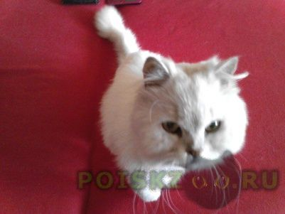 Найден кот г.Челябинск