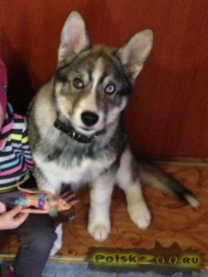 Пропала собака кобель г.Пермь