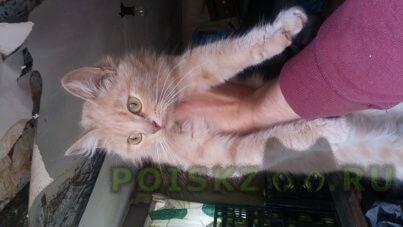 Найдена кошка г.Немчиновка