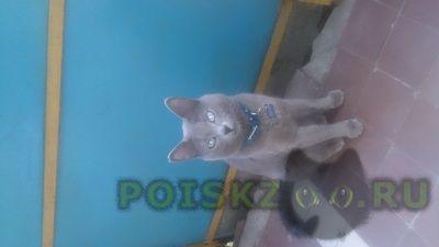 Пропала кошка г.Казань
