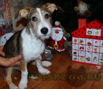Найдена собака г.Краснодар