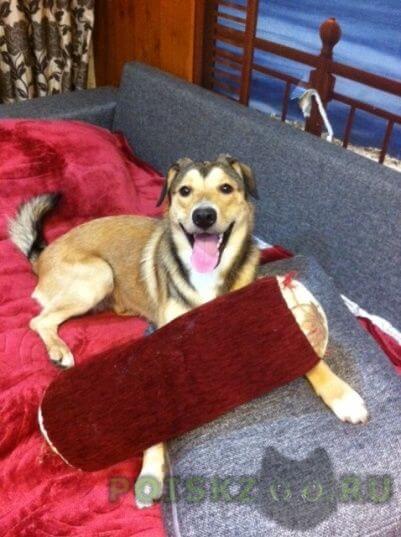 Пропала собака кобель г.Сергиев Посад