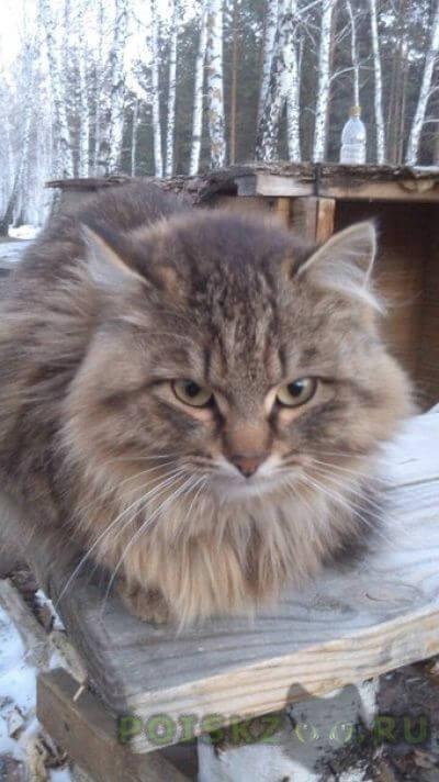 Найдена кошка в лесу района парковый г.Челябинск